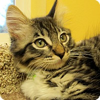 Adopt A Pet :: Sammy - Eastsound, WA