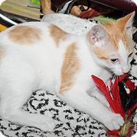 Adopt A Pet :: Bowie - Pasadena, CA
