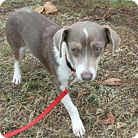 Adopt A Pet :: MOCHA-ADOPTED - East Windsor, CT