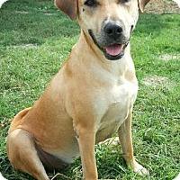 Adopt A Pet :: Kalani - Fredericksburg, TX