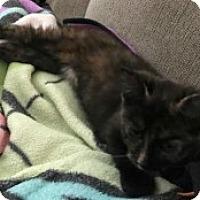 Adopt A Pet :: Jill - McHenry, IL
