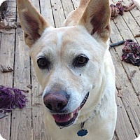 Adopt A Pet :: Bayley-Always Smiling - Olive Branch, MS