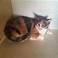 Adopt A Pet :: Jinx - Palmdale, CA