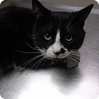 Adopt A Pet :: Anubis - Northfield, OH