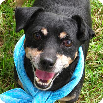 Terrier (Unknown Type, Small) Mix Dog for adoption in El Cajon, California - Oliver