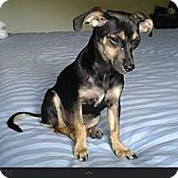 Adopt A Pet :: Bebe - Hilliard, OH
