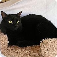 Adopt A Pet :: Blossom - Palmdale, CA