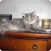 Adopt A Pet :: Aubrey - Xenia, OH