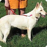 Adopt A Pet :: Jemma - Hernando, MS