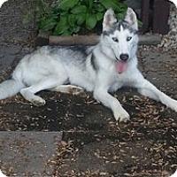 Adopt A Pet :: Aurora - Hilliard, OH