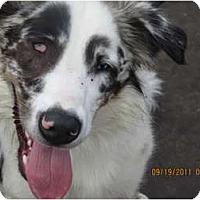 Adopt A Pet :: Sarah - Blooming Prairie, MN