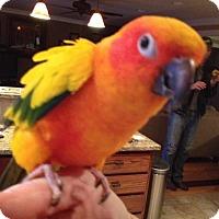 Adopt A Pet :: Midgett & Gidgett - St. Louis, MO