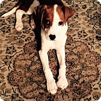 Adopt A Pet :: Elliot - Toledo, OH