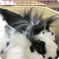 Adopt A Pet :: Pippa - Williston, FL