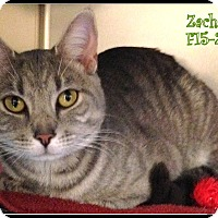 Adopt A Pet :: Zachary - Tiffin, OH