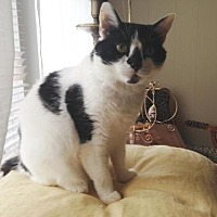 Adopt A Pet :: Ariel/kim - White Bluff, TN