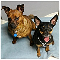 Adopt A Pet :: Rudy & Cocoa - Forked River, NJ