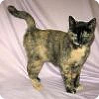 Adopt A Pet :: Kalika - Powell, OH