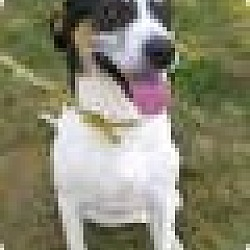 Photo 1 - Hound (Unknown Type) Mix Dog for adoption in Metamora, Indiana - Bailey