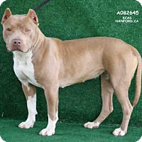 Adopt A Pet :: A082645 - Hanford, CA