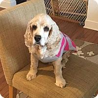 Adopt A Pet :: Copper - Edgewater, NJ
