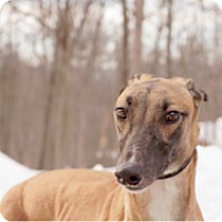 Adopt A Pet :: E's Sallyomalley - Gerrardstown, WV