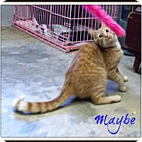 Adopt A Pet :: Maybe - Amory, MS