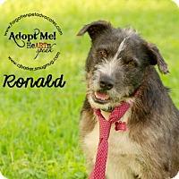 Adopt A Pet :: Ronald - Pearland, TX