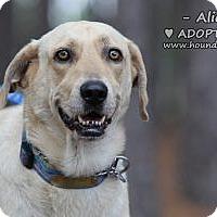 Adopt A Pet :: Alicia - Minneola, FL