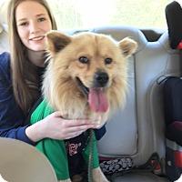Adopt A Pet :: Sugar Bear - Willingboro, NJ