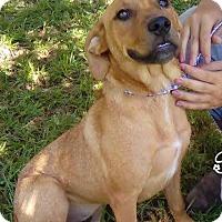 Adopt A Pet :: Sweetie - Orlando, FL
