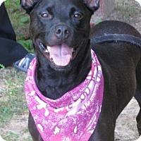 Adopt A Pet :: Emma - Voorhees, NJ
