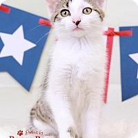 Adopt A Pet :: Spritz - Sterling Heights, MI