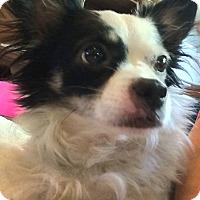 Adopt A Pet :: Freida - Hamilton, ON