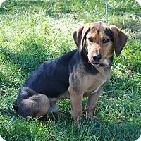 Adopt A Pet :: Roper - Parsons, KS