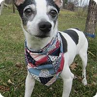 Adopt A Pet :: Katie - Menomonie, WI