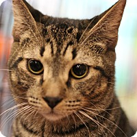 Adopt A Pet :: Markl - Marietta, GA