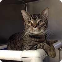 Adopt A Pet :: B-1 Shadow - Triadelphia, WV