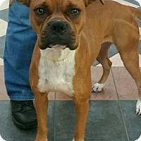 Adopt A Pet :: Glamour - Austin, TX