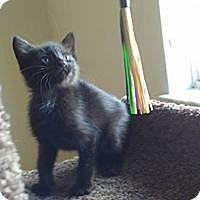 Adopt A Pet :: blake - Hollywood, FL