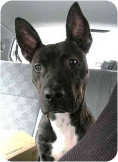 rocky adopted dog brooklyn ny american