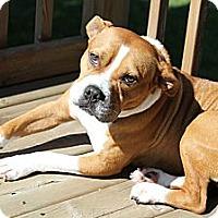Adopt A Pet :: Judd - Muskegon, MI