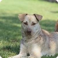 Adopt A Pet :: SCOOTER - Nuevo, CA