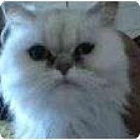 Adopt A Pet :: Aria - Beverly Hills, CA