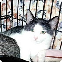 Adopt A Pet :: Valerie - Colmar, PA