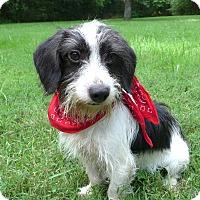 Adopt A Pet :: Aaron - Mocksville, NC