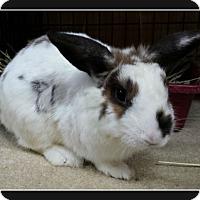 Adopt A Pet :: Cherish - Williston, FL