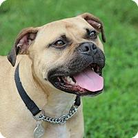 Adopt A Pet :: Hambone - Eastpointe, MI