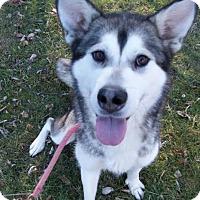 Adopt A Pet :: Lilac - Augusta County, VA