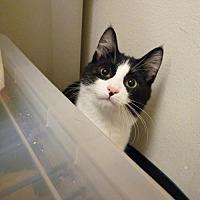 Adopt A Pet :: Panda - Capshaw, AL